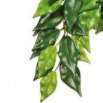 Porovnání ceny HAGEN Rostlina Ficus velká 70 cm