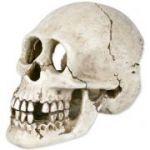 Porovnání ceny Trixie Lidská lebka 15 cm