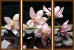 Porovnání ceny EVK Obraz orchidej růžová 3 díly; velký; vnější rám