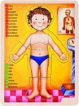 Porovnat ceny WOODY - Drevené puzzle anatómia - ľudské telo 90324
