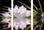 Porovnání ceny EVK Obraz - lotosový květ