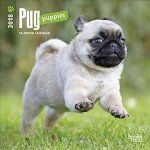 Porovnat ceny Brown Trout Publishers 2018 Pug Puppies Mini Wall Calendar