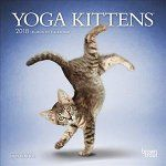 Porovnat ceny Brown Trout Publishers 2018 Yoga Kittens Mini Wall Calendar
