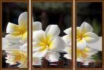 Porovnání ceny EVK Obraz květy na vodě 3 díly; velký; vnější rám